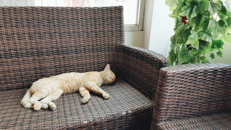 High angle view of cat sleeping on sofa at home