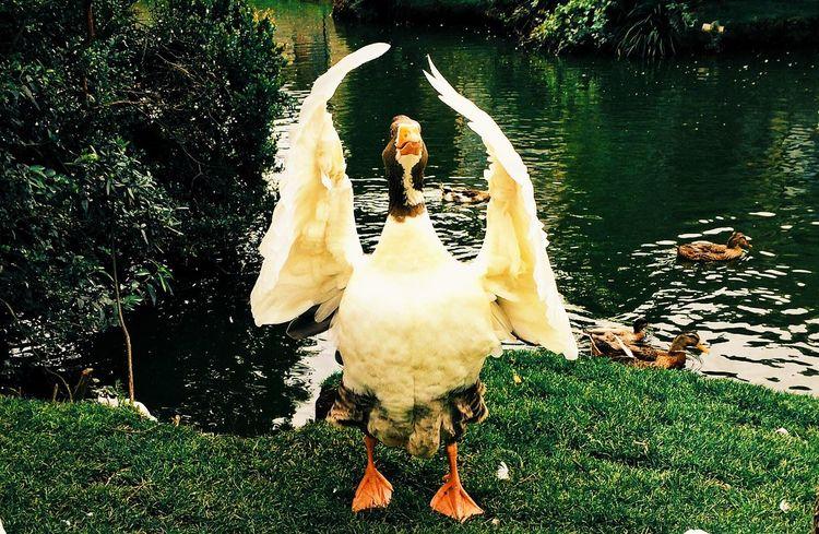 Ganso Goose PuertoVaras IPhoneography