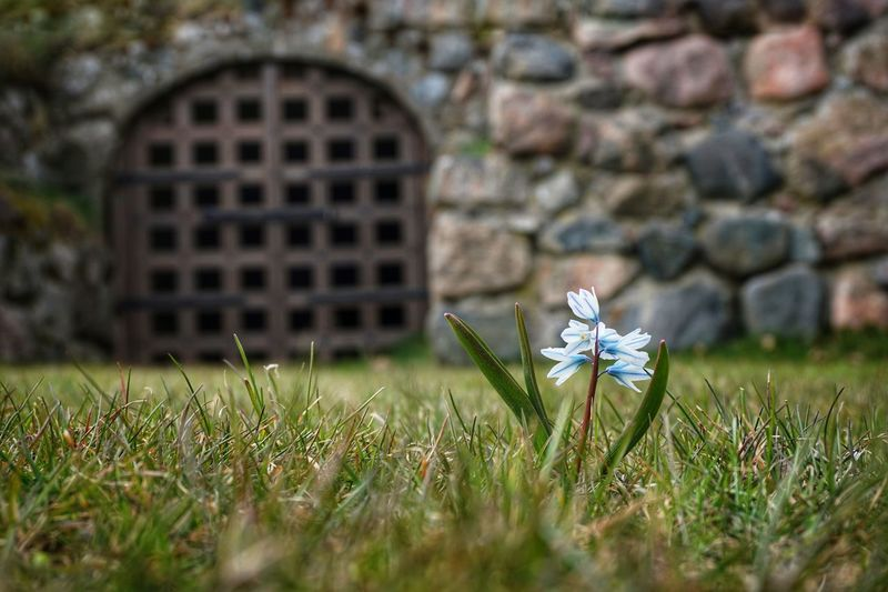 Old Dungeon 2019 Niklas Storm April Flower Grass Architecture Close-up My Best Photo