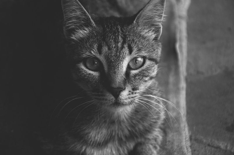 Amy - my first cat <3 EyeEmNewHere Nikon Animal Themes Blackandwhite Close-up D90 Day Domestic Animals Domestic Cat Feline Konstantine Berulava Looking At Camera Mammal Nature No People One Animal Outdoors Pets Portrait