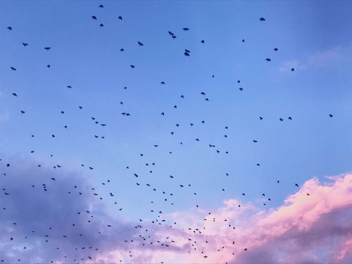 Sky and his rhythm Sky Collection Cloudy Cloud Cloud - Sky Sky And Clouds Bird Animals In The Wild Flying Vertebrate Animal Themes Group Of Animals Animal Wildlife Flock Of Birds Freedom Sky Nature