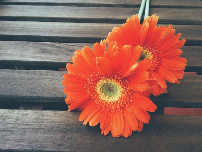 High angle view of orange gerbera daisies on wooden bench
