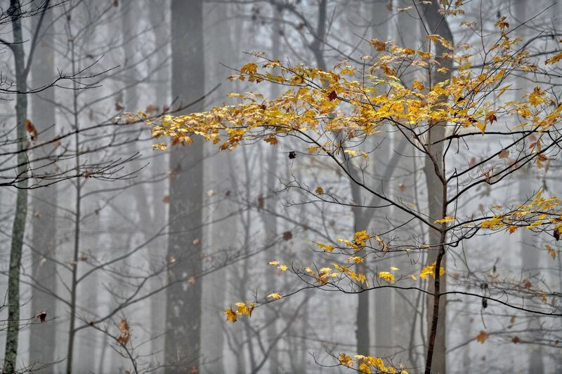 Tree Plant Branch Beauty In Nature Focus On Foreground Nature Yellow Autumn Day Growth Change No People Outdoors Flowering Plant Flower Tranquility Close-up Bare Tree Freshness Vulnerability