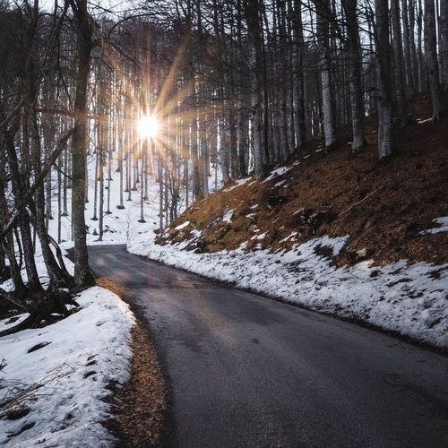 The road that leads to the top Cansiglio Treviso Italy Snow Winter Cold Temperature Sun Nature Lens Flare Sunbeam Sunlight Road Scenics The Way Forward Beauty In Nature Outdoors Tree Tranquil Scene Tranquility Frozen Forest No People Sunset