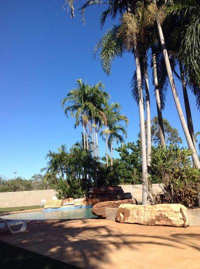 WesternAustralia Broome Poollife Palm Tree Blue Clear Sky Nature Travelling Travelling Photography Roadtrip Australia