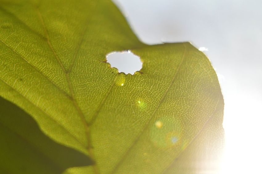 Blue Sky Close-up Detail Fragility Freshness Hole In The Sky Leaf Natural Pattern Plant Softness Sun