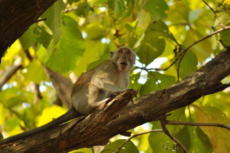 a wild monkey is waiting for someone to give food, because in the summer the plants become dry and difficult to get food Monkey Forest Rainforest Nature Nature_collection Nature Photography Naturelovers Animal Themes Tree Branch Sitting Full Length Cute Tail Animal Eye Animal Head  Animal Nose Animal Face Animal Hair