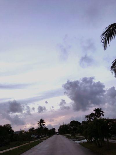 Road Tree Sky Transportation Palm Tree The Way Forward Cloud - Sky