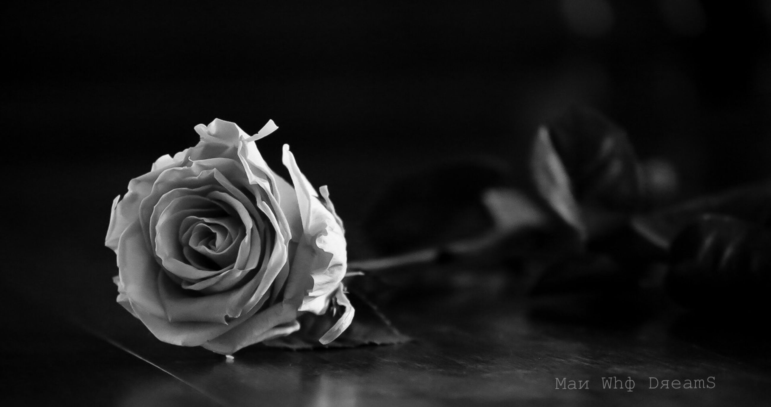 rose, rose - flower, flower, freshness, beauty in nature, flowering plant, close-up, plant, vulnerability, petal, fragility, flower head, inflorescence, nature, no people, indoors, table, leaf, selective focus, black background, bouquet, flower arrangement