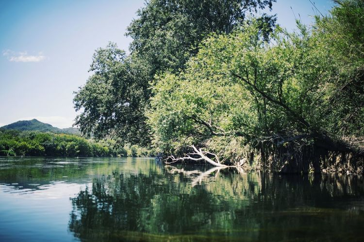 Nature Nature_collection Nature Photography Naturelovers Green Color Green Outdoors Outdoor Photography Lake Lake View Landscape River Riverside Forest Photography Travel Destinations Tranquil Scene Tree Tranquil Scene