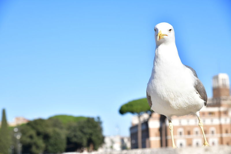 Seagull perching on a bird