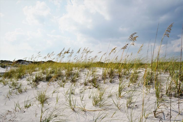 The Dunes Dramatic Sky Beachphotography Dunescape Florida Landscape Nikonphotography Sand Dune Seaoats The Great Outdoors - 2018 EyeEm Awards