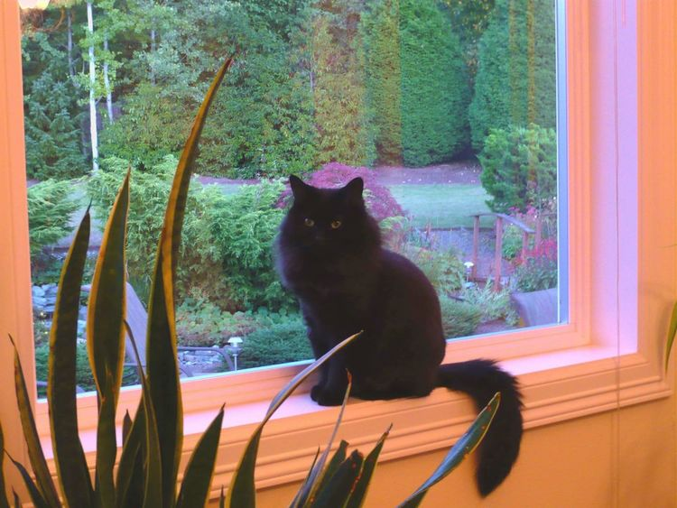My Cat Zoey Domestic Cat Pets Black Cat Nature Outdoors Tree Tranquil Scene Nature Tranquility Green Colors Feline Beauty Girl Queen No People Awe Peace Beauty Reflection Flowers Freedom Dramatic Sky Love Sweet Flower