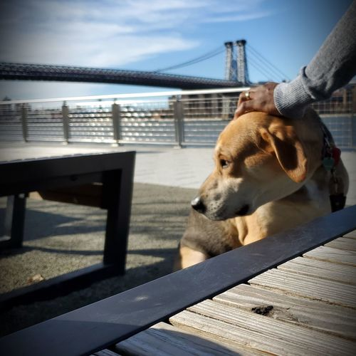 Dog relaxing on bench by railing