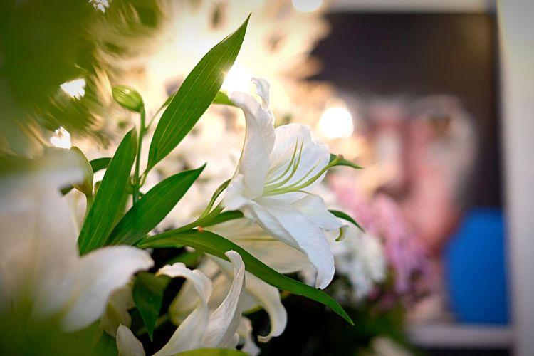 🌸 Flower &