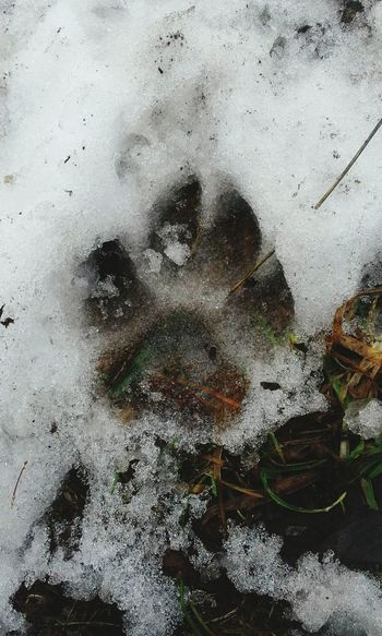 Close-up No People Backgrounds Day Outdoors Nature Snow ❄ Wolf Tracks