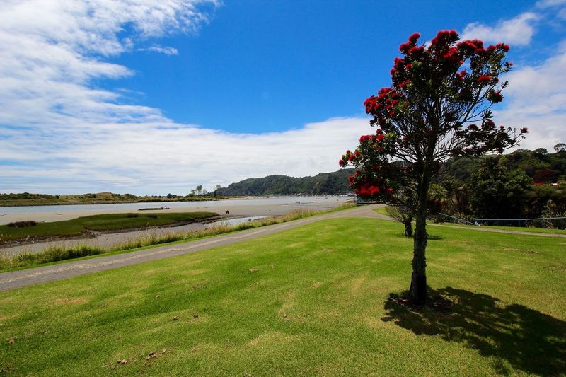 Pohutukawa New Zealand River Tree