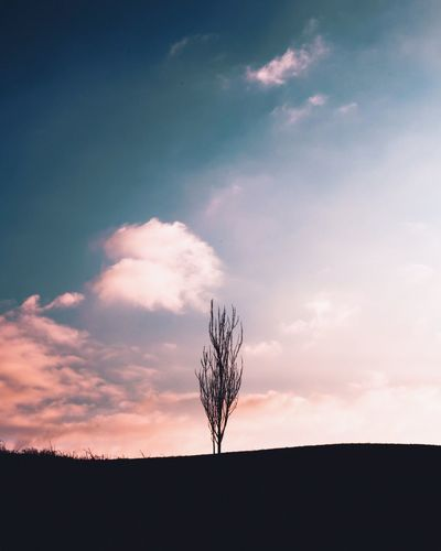 Standing in the sunshine Tree Alone Alone Twight Sunset Tree Sky Silhouette Beauty In Nature Nature Tranquil Scene Tree Tranquility No People Sunset Landscape Cloud - Sky Scenics Outdoors Day Bare Tree Colour Your Horizn Summer Exploratorium Visual Creativity The Great Outdoors - 2018 EyeEm Awards