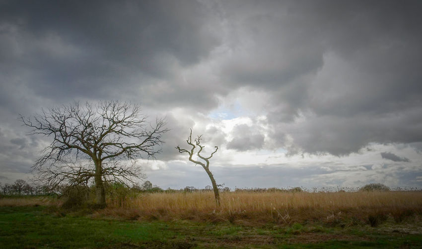 Swamp 2 Tree Storm Cloud Cloud - Sky Landscape Social Issues Field Rural Scene Grass Agriculture Nature Outdoors No People Day Sky Beauty In Nature