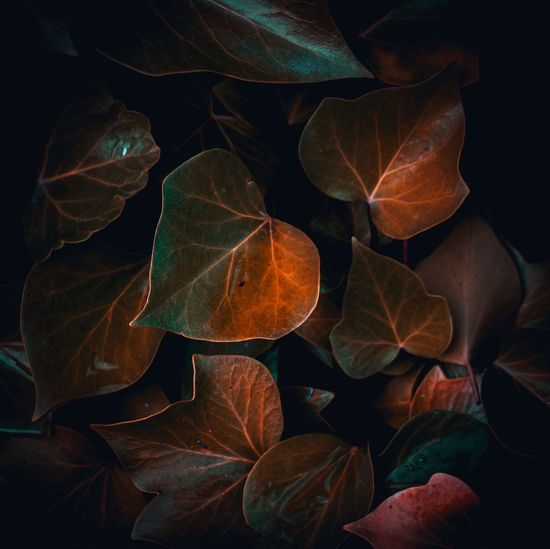 The leaves and branches