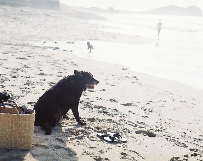 2015 summer Labrador Retriever Sea First Eyeem Photo