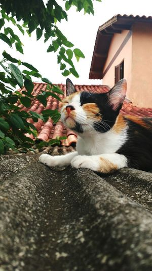 Domestic Animals Tree Pets No People Sky Nature Cat Relaxing Lifestyles Love