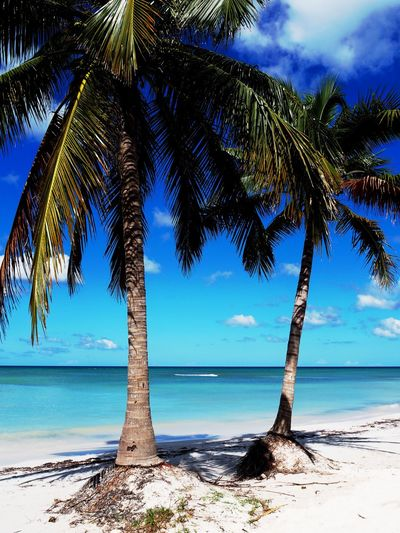 Tropical Climate Palm Tree Tree Water Beach Land Beauty In Nature Plant Sky Scenics - Nature Tranquility Sea Tranquil Scene Nature Growth Trunk Tree Trunk No People Horizon Horizon Over Water Coconut Palm Tree Outdoors Tropical Tree Turquoise Colored Palm Leaf