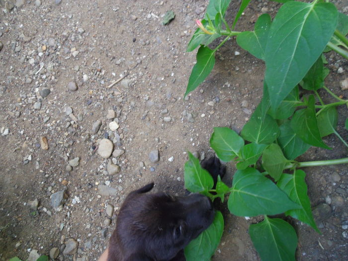 High angle view of cat on plant