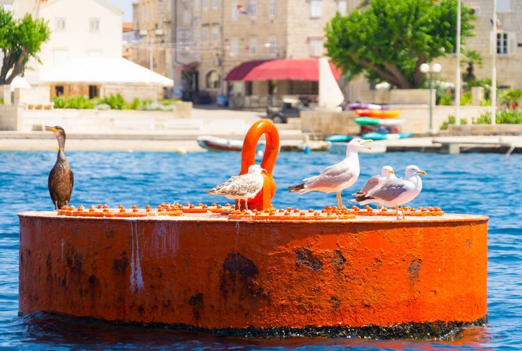 Harbor of life Animal Themes Bird Close-up Croatia Croatiafulloflife Day Destination Floating On Water Focus On Foreground Harbor Korčula Large Group Of Animals No People Outdoors Perching Sculpture Swimming Pool Trip Water