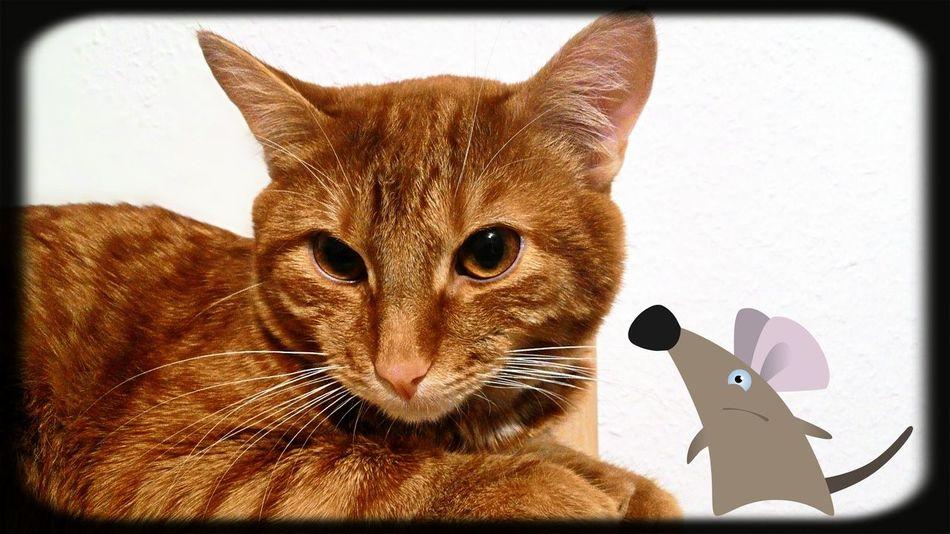 Пихтовый Лесная 7 кот Tiger