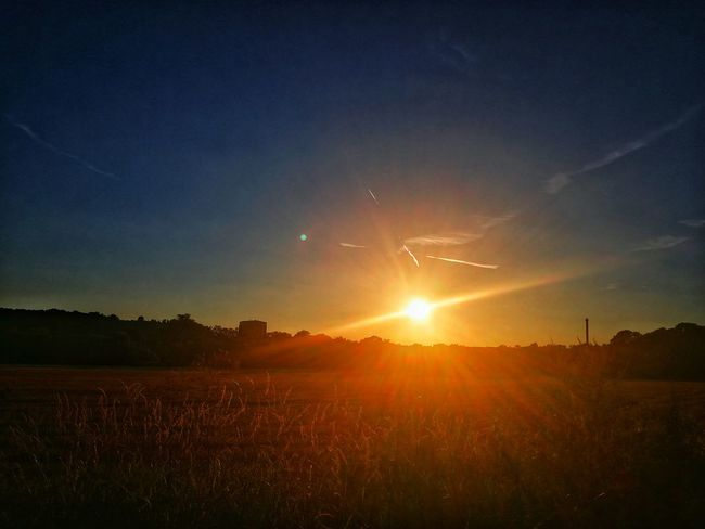 Sunset Agriculture Tree Silhouette Rural Scene Field Sunlight Sky Landscape Shining Sun Sunbeam