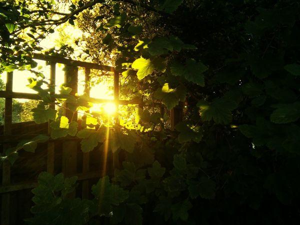 Enjoying The Sun ☀ Oneplusone Colour Of Life Beauty In Nature Crispy Blue Sky Taking Photos Green Leaves
