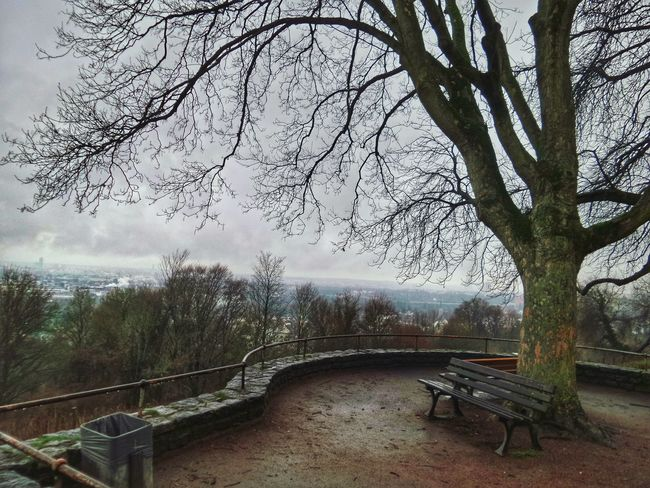 Winter Januar 2018, Ffm Impressions Wet Winter Depressing Days Gray Skies Pollution ın My World View Down From A Hill Frankfurt Am Main Germany🇩🇪 Tree Nature Sky No People Day Beauty In Nature Outdoors