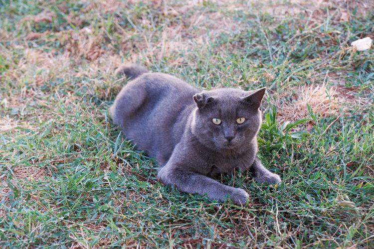 Portrait of cat lying on grass