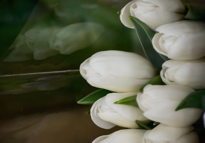White Tulips on table in home closeup Background with reflection Backgrounds Beauty In Nature Blooming Close-up Day Decoration Flower Flower Head Fragility Freshness Growth Indoors  Leaf Nature No People Outdoors Petal Plant Table Tranquility Tulips Water White Color White Tulips Wedding Long Goodbye