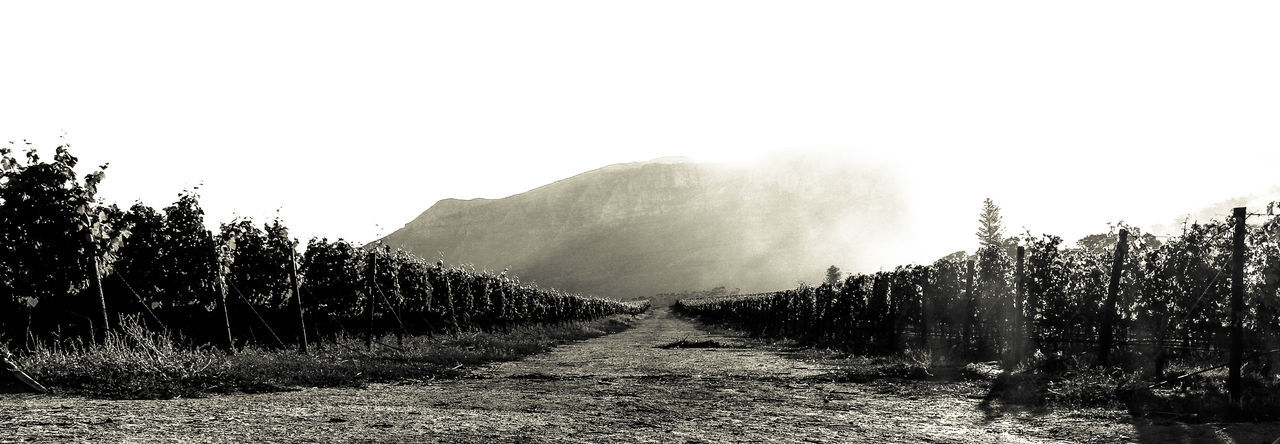 The Old Vineyard Jeep Track at Constantia, Cape Town. Agriculture Beauty In Nature Black And Whire Cape Town Beauty Jeep Track Landscape Monochrome Napa Valley Nature No People Outdoors Tranquility Vineyard Wine Wineland