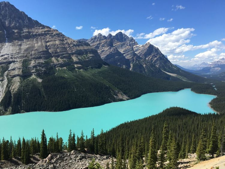 Petto Lake Alberta Banff National Park  Canadian Rockies  Peyto Lake Beauty In Nature Canada Forest Glacial Lake Landscape_photography Majestic Mountain Mountain Range Nature No People Scenery Scenics Turquoise Untouched Nature Wilderness Lost In The Landscape