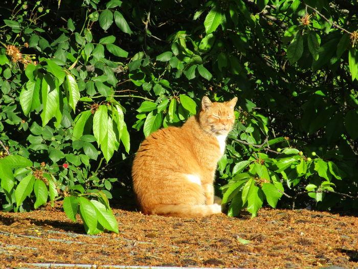 Cat Day Domestic Cat Feline Growth Mammal No People Orange Kitty Outdoors Pets Resting Sunning Pet