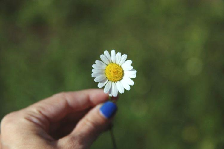 Dicen que la felicidad está en las pequeñas cosas. Happy Happiness Flower Littlethings Goodmorning :)