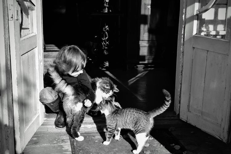 High Angle View Of Boy Crouching With Cats On Doorway