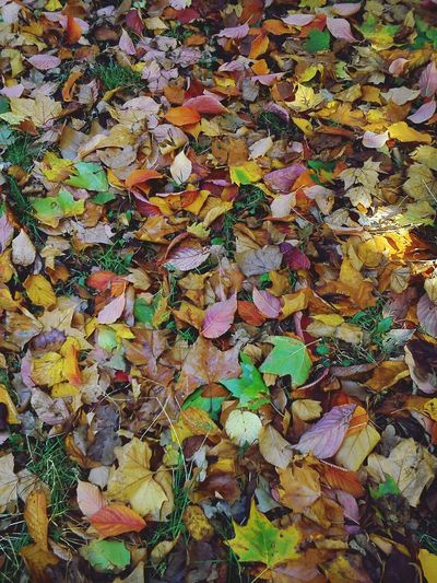 A tapestry of colourful leaves Textures And Surfaces Nature_collection Eyeemnaturelover Connected With Nature