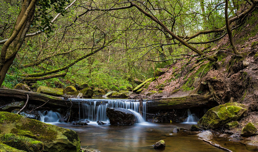 Beauty In Nature Environment Flowing Flowing Water Forest Growth Land Long Exposure Motion Nature No People Outdoors Plant Power In Nature Rainforest Rock Rock - Object Scenics - Nature Solid Stream - Flowing Water Tree Water Waterfall