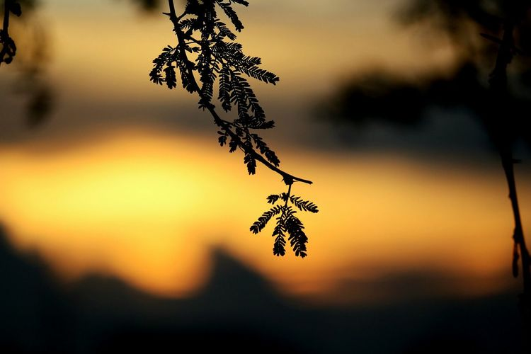 Nature Sunset Beauty In Nature Outdoors Tree No People Close-up Branch Hanging Day Flower Fragility Sky Freshness