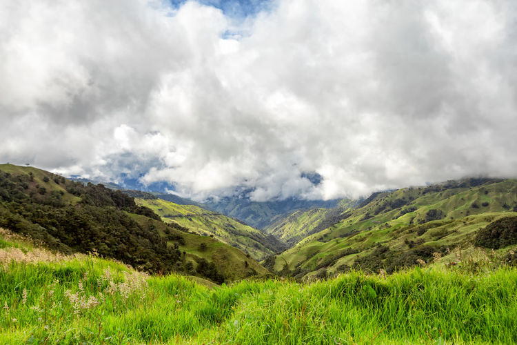 Verdant green grass in the mountains outside of Salento, Colombia. Cloud Colombia Farm Hiking Palm Pasture Quindío Rural Tree Trip Andean Cauca Colombian  Countryside Forest Hike Jeep Landscape Mountain Range Outdoors Quindío Salento Tolima Trek Wax