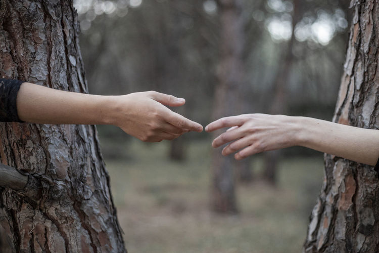 Cropped hands of women reaching by tree trunks