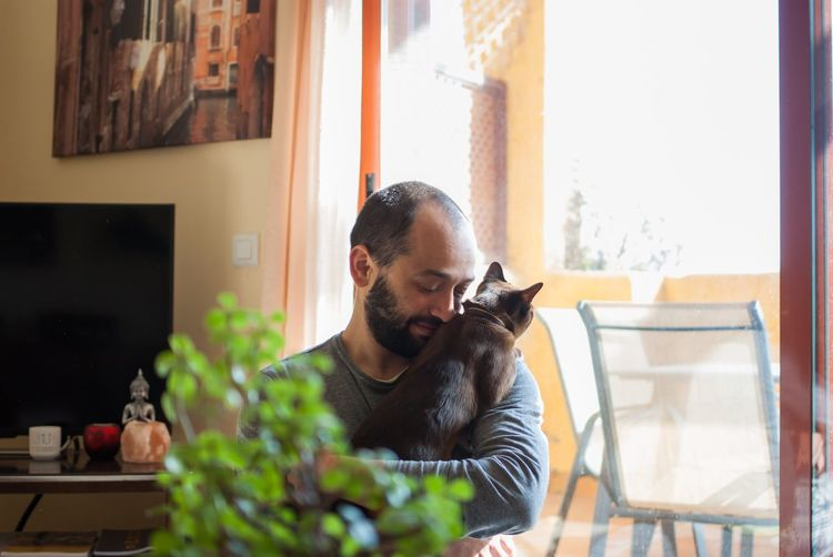 Beard Brown Cat  Burmese Cat Cat Day Domestic Animals Home Home Interior Looking Through Window Love Man Pets Relaxation Sitting