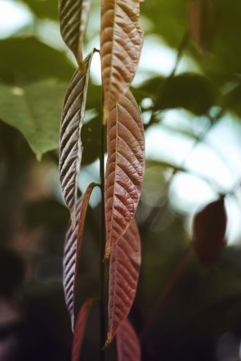 Close-up of leaf hanging on rope