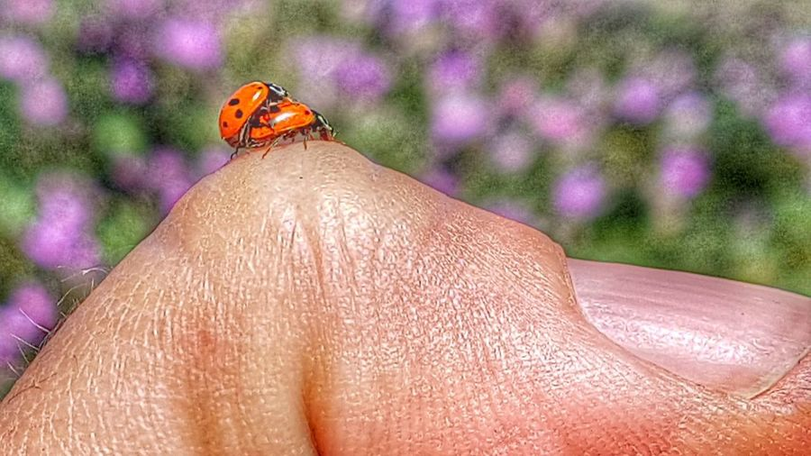 love Insects