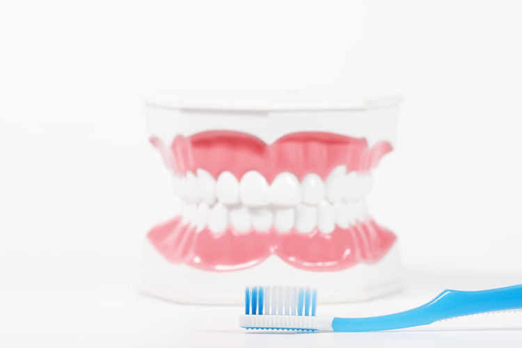 Dental model with toothbrush Dental Health Healthcare And Medicine Indoors  Studio Shot Human Teeth Hygiene Toothbrush Close-up Medical Equipment White Background Still Life Dental Equipment Copy Space Routine Red Artificial Healthy Lifestyle Dentist Temptation Dieting