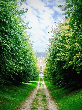 Märchenschloss. Schloss Bothmer Green Color My Point Of View Green Colour Green Architectural Column Nature Landscape Landscape_Collection The Way Forward Castle Klūtz Light And Shadow Baltic Sea Architecture_collection Beauty In Nature No People Fairytale Castle Allee Light Beautiful Nature Autumn
